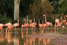 Barcelona Hayvanat Bahçesi