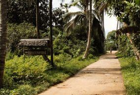 Jozani Ormanı