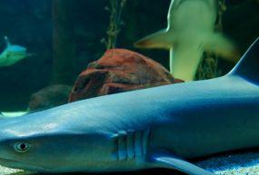 Underwater World (Sualtı Dünyası)