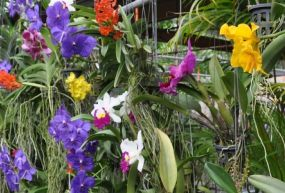 Phuket Orkide Çiftliği