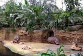 Köln Hayvanat Bahçesi