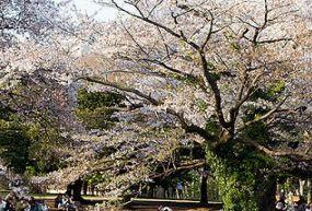 Yoyogi Parkı