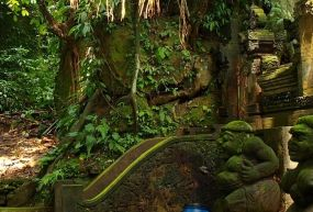 Maymun Ormanı