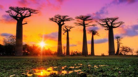 Madagaskar Turları